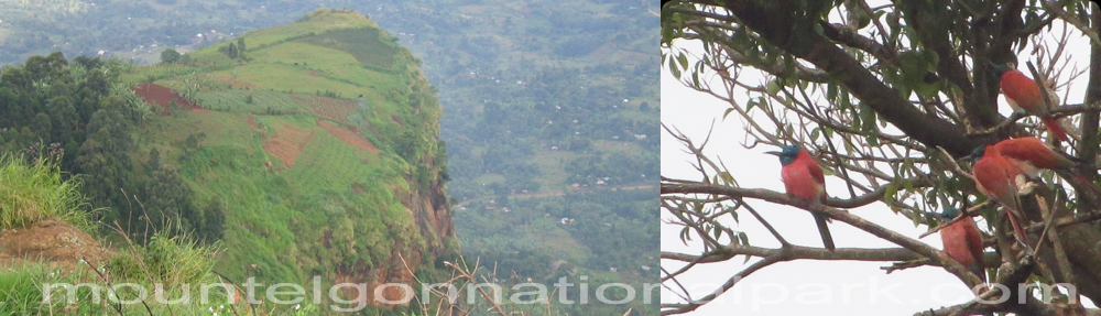 wanale-mount-elgon-national-park